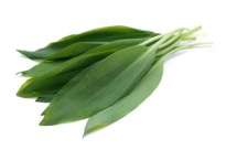 Wild Garlic - Culinary herbs