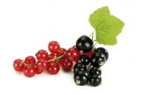 Red and Black Currant - Freeze -dried Fruits
